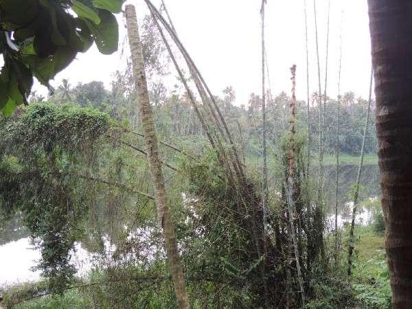 Riverside view from Farmkamp