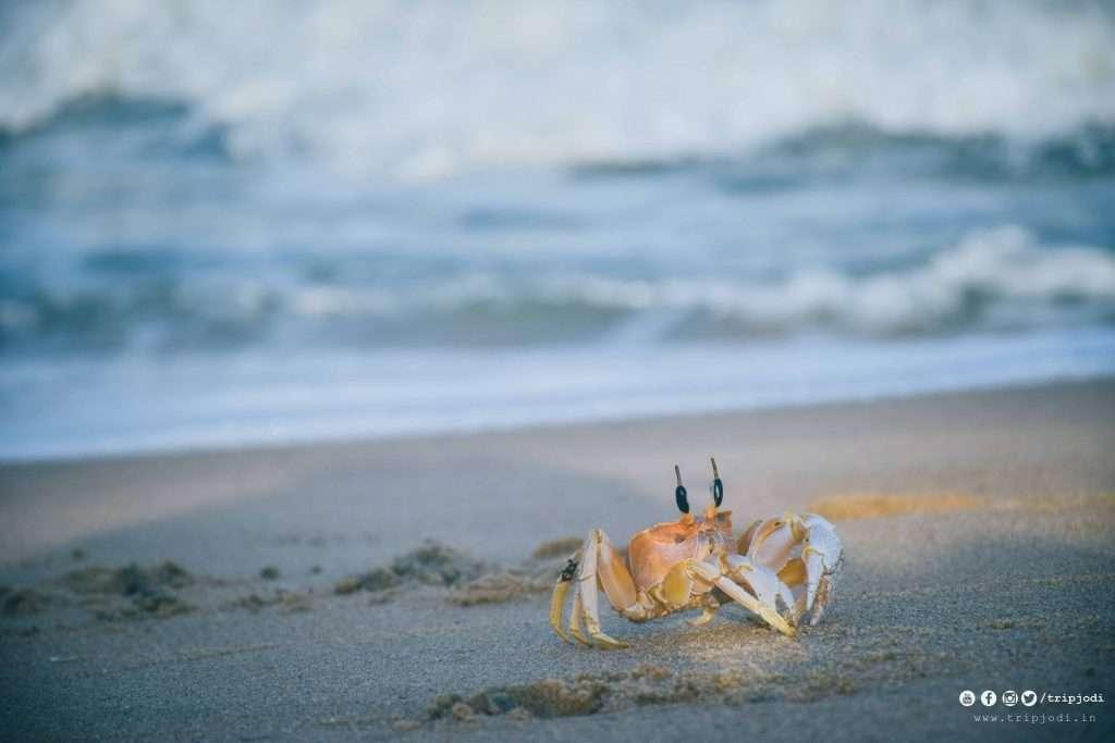 Lakshmipuram Beach mayyanad Tripjodi